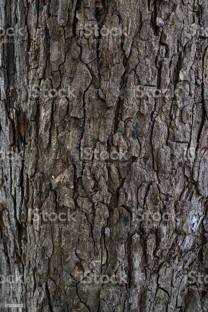 Texture du vieux Tronc d'arbre photo libre de droits