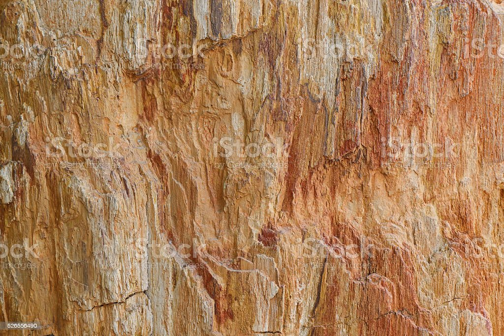 Texture of petrified ancient wood changing into stone by nature stock photo