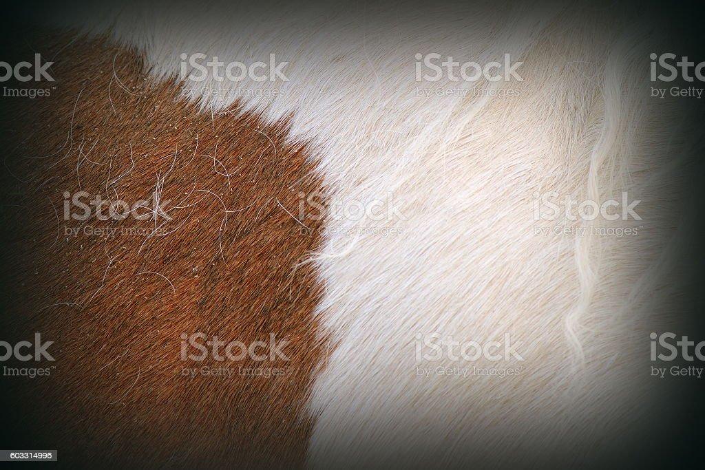 texture of pony fur stock photo