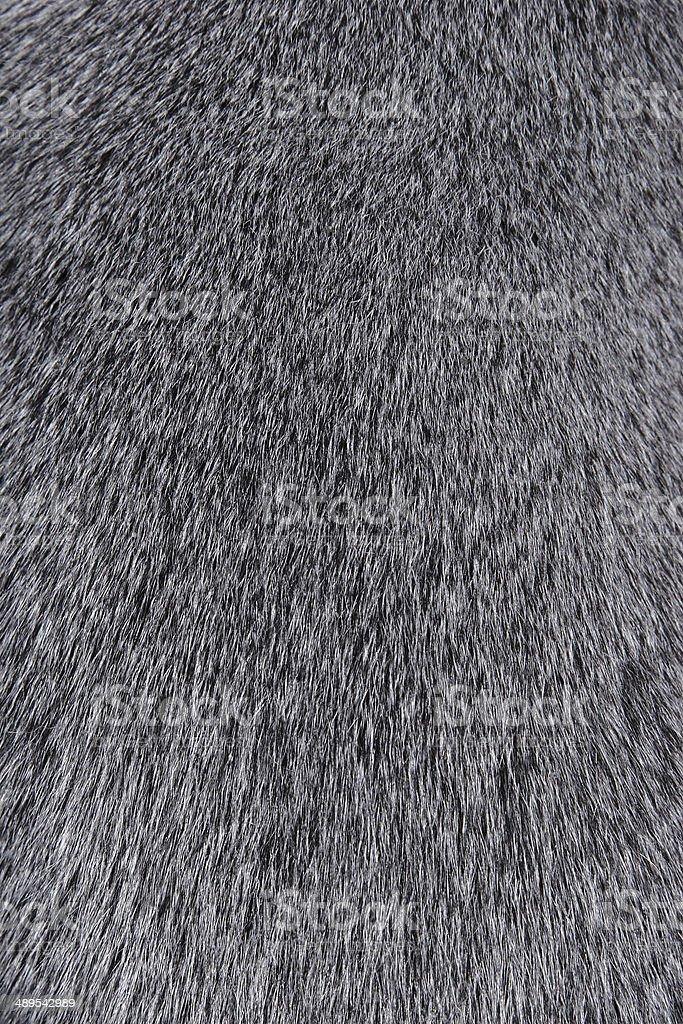 Texture of Smooth animal gray hair closeup