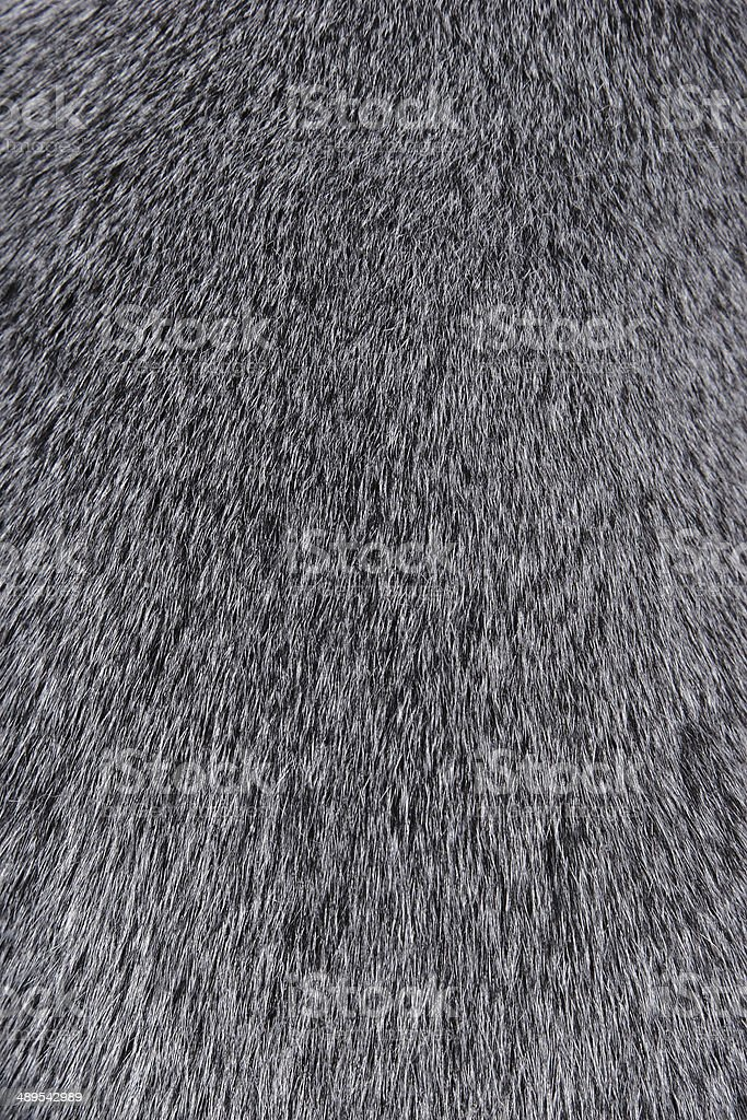 Texture of Smooth animal gray hair stock photo