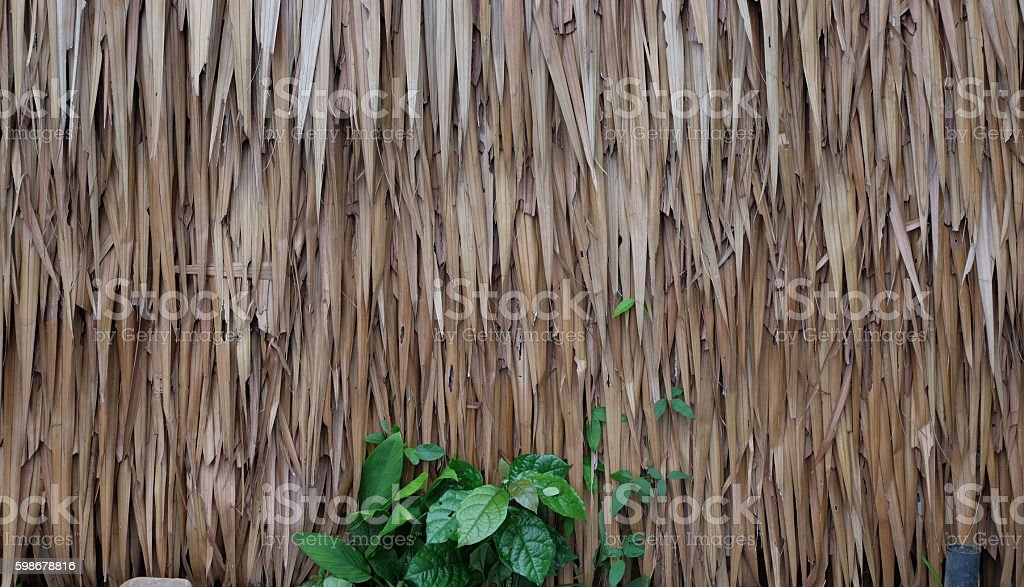 texture of Thatched from Imperata cylindrica Thailand stock photo
