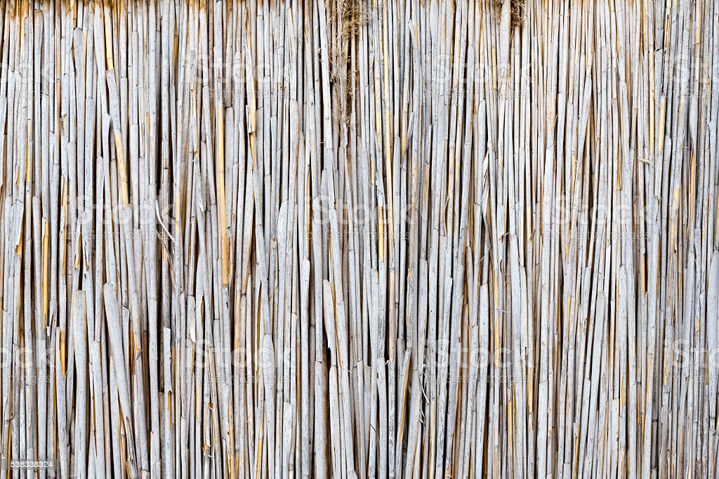 texture of the dry reeds stock photo