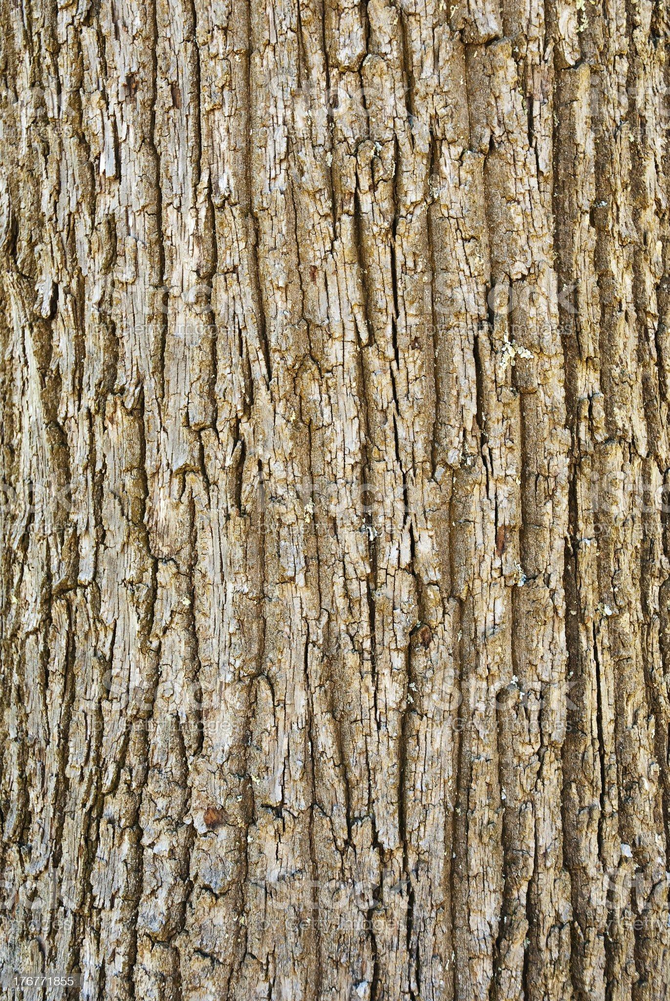Texture of tree bark royalty-free stock photo