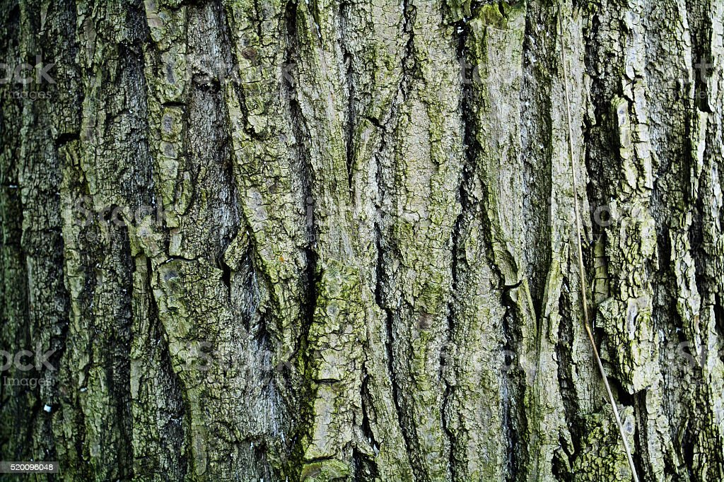 texture of tree bark stock photo