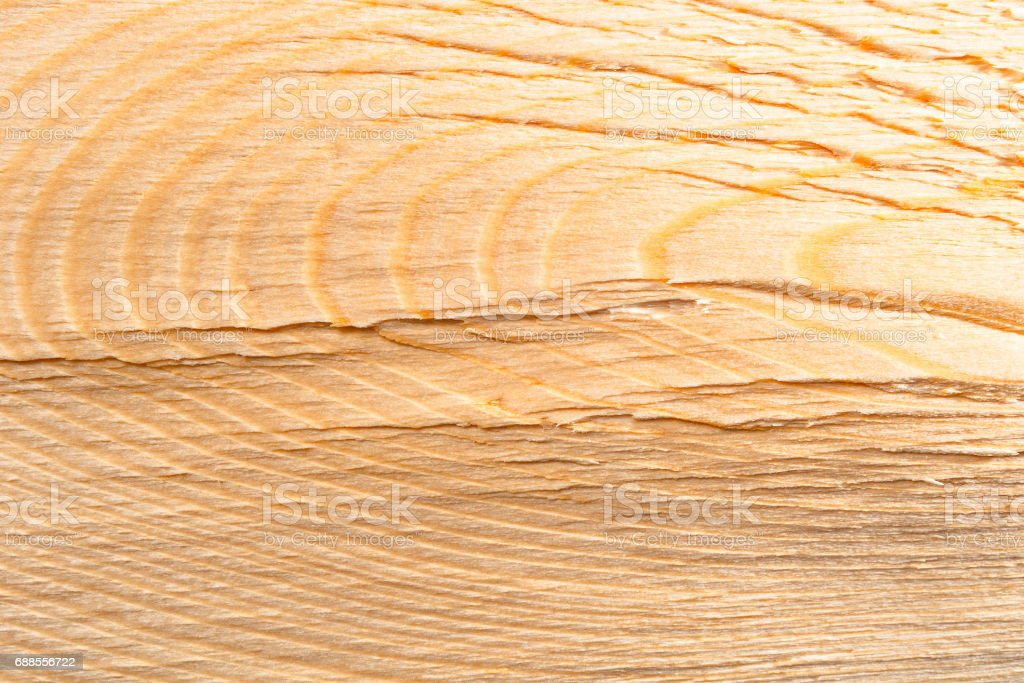 Texture of wood birch background closeup stock photo