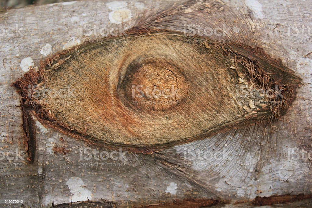 Texture of wood like a eye for background stock photo