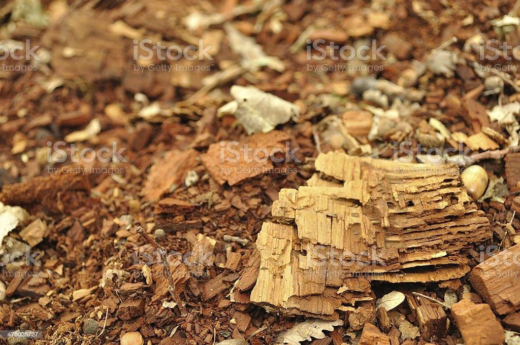 Tekstury drewniane fragmenty zbiór zdjęć royalty-free
