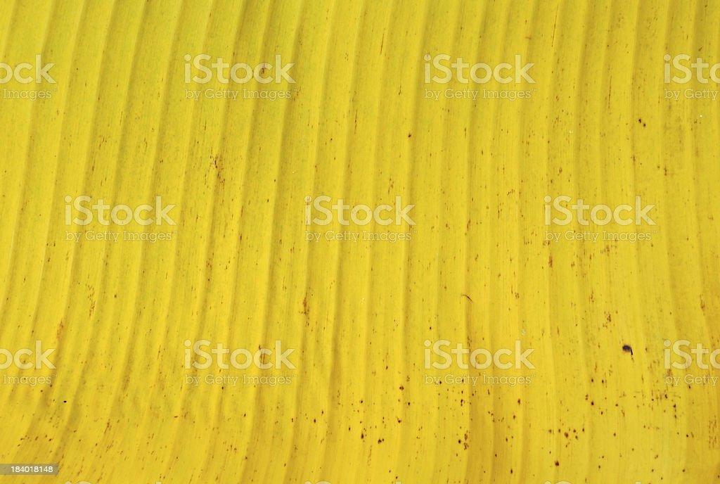Texture of yellow banana leaf royalty-free stock photo