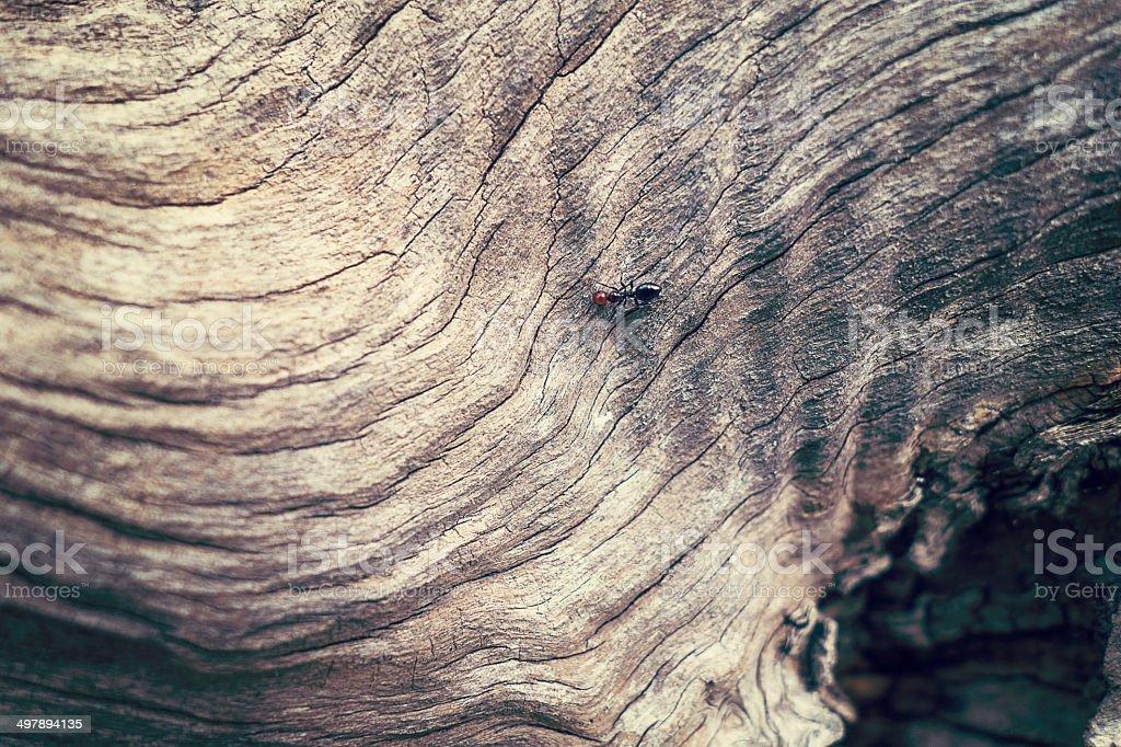 Texture Olive tree wood stock photo