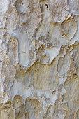 texture on tree