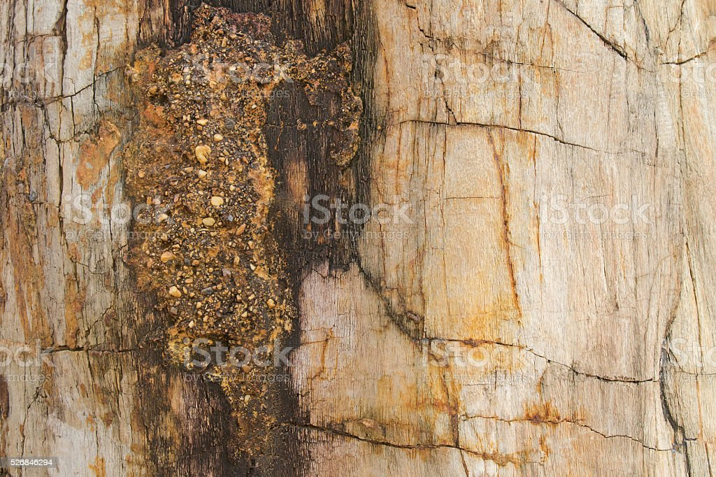 Texture photo of petrified ancient wood changing into stone stock photo