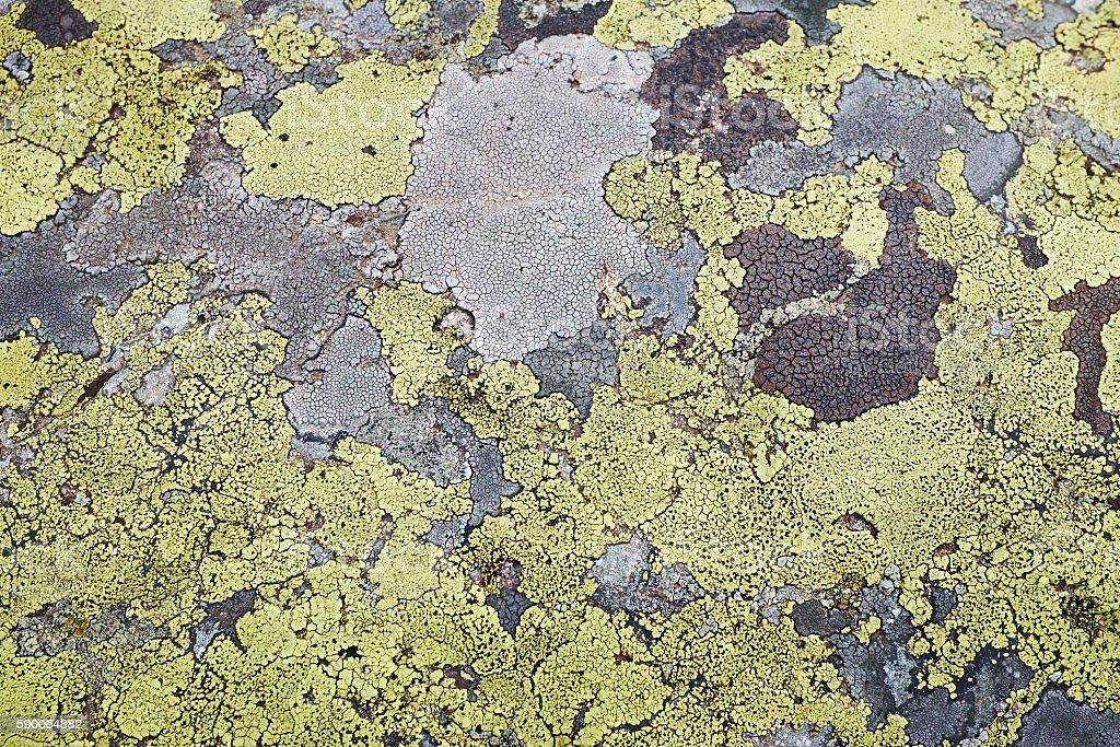 Texture stone mold stock photo