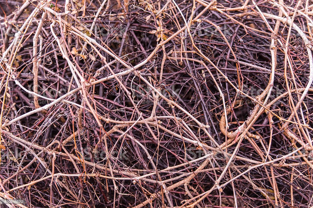 Texture with dry twigs. stock photo