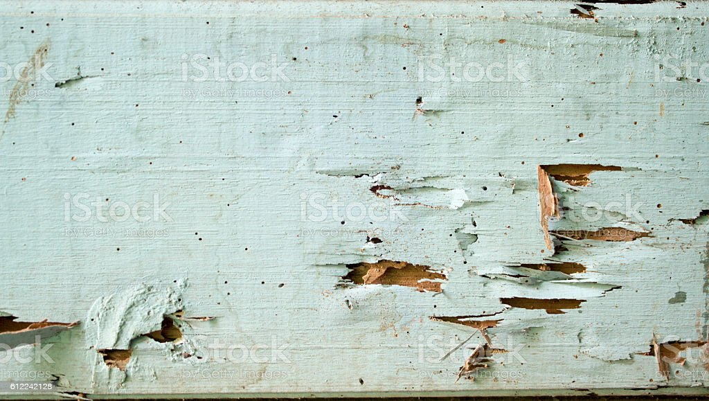 texture wood damage which eaten by termites stock photo
