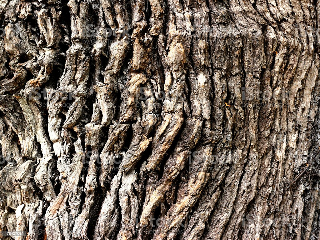 texture wood line royalty-free stock photo