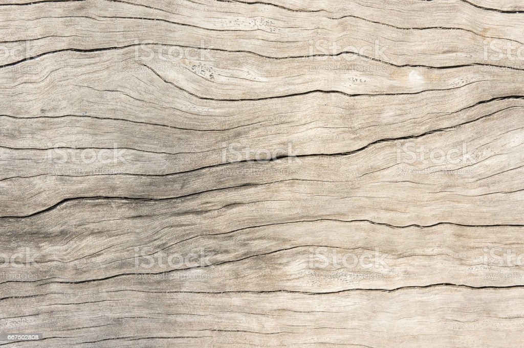 Texture wood oak older style, background wooden old dirty stock photo