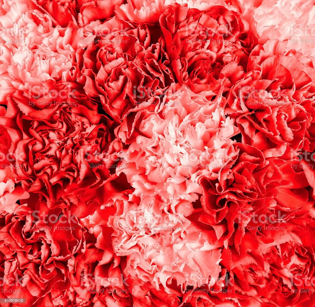 textured abstract background from a bouquet of flowers closeup stock photo