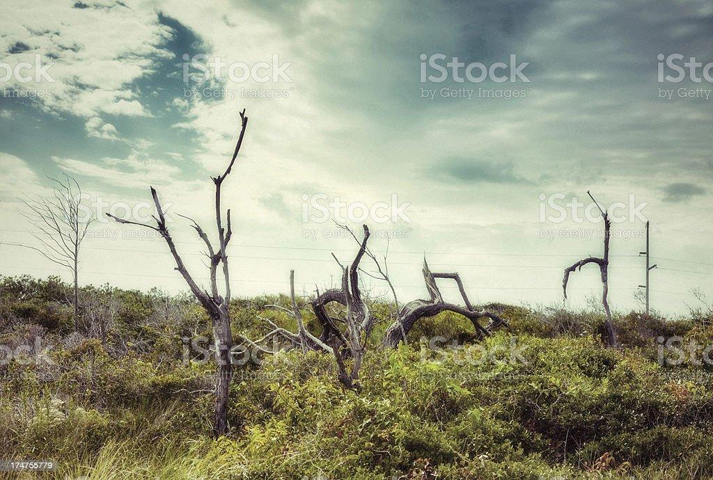 Textured Barren Trees royalty-free stock photo