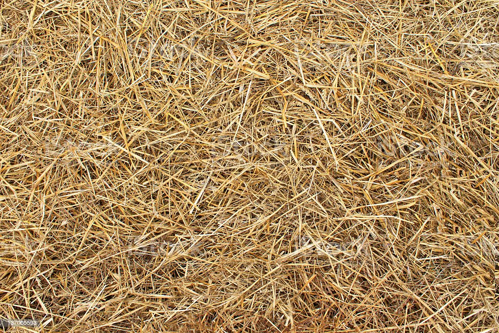 Textured close-up of hay strewn all around stock photo