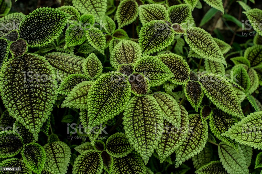 Textured leaves stock photo
