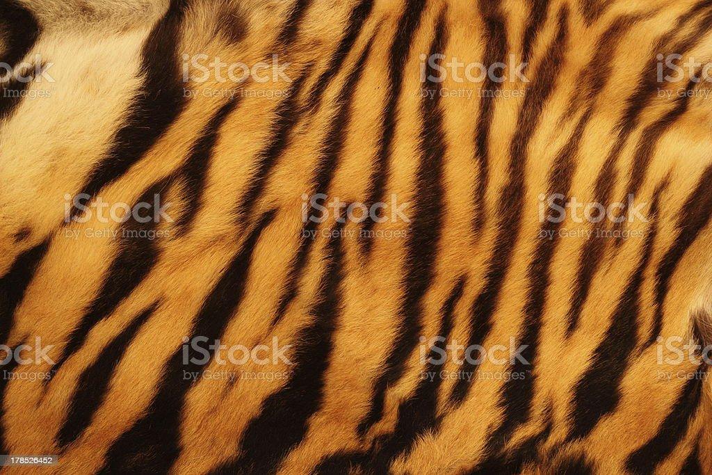 textured tiger fur stock photo