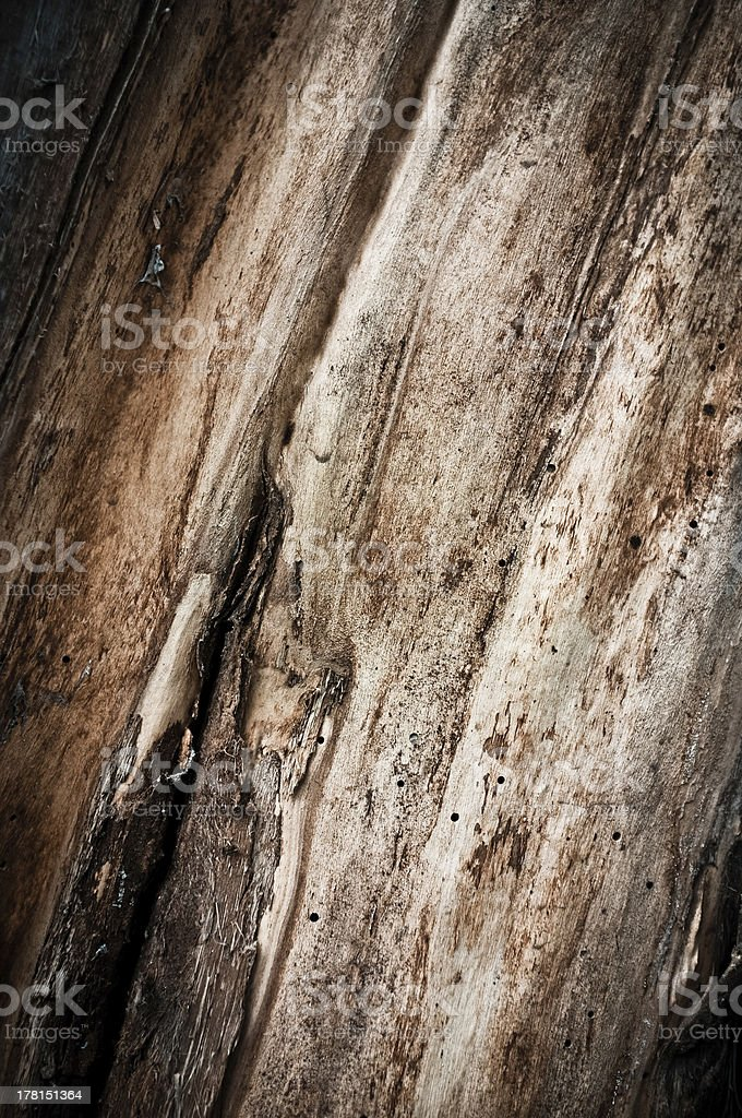 Textured Tree Background royalty-free stock photo
