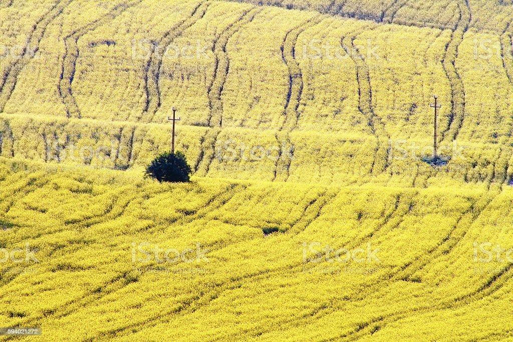 textured turnip field stock photo