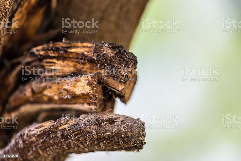 Textured Wood, Branch of an old tree stock photo