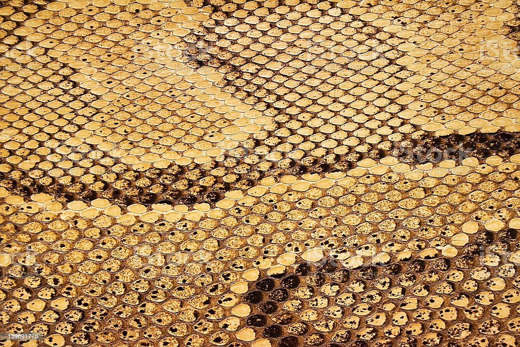 Textures – Snakeskin #04 royalty-free stock photo