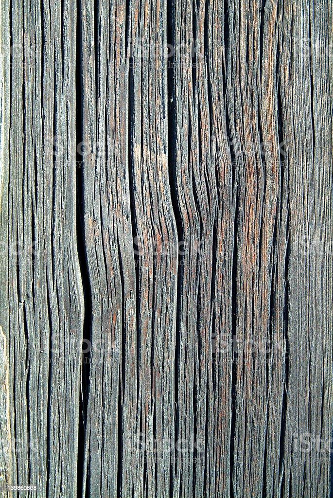 texture-tree royalty-free stock photo