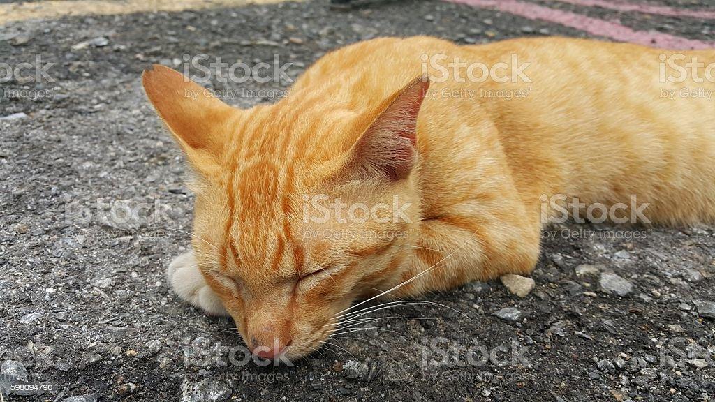 thai cat kitten sleeping stock photo
