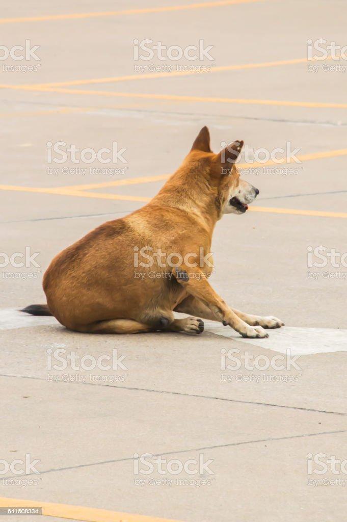 Thai dog , local dogs stock photo