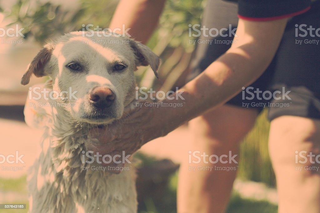Thai dog taking a shower with soap and water stock photo