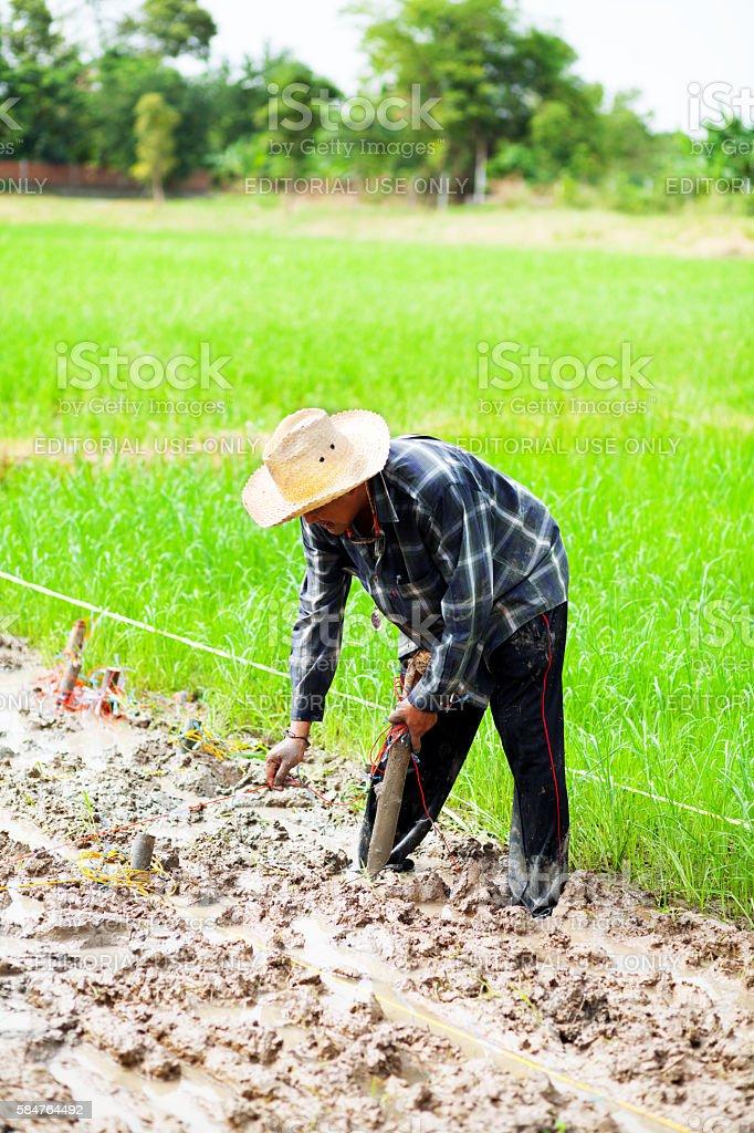 Thai farmer in organic rice field stock photo