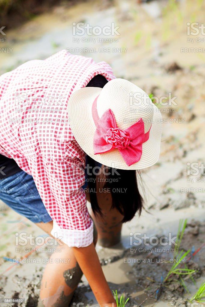 Thai female rice farmer with straw hat stock photo