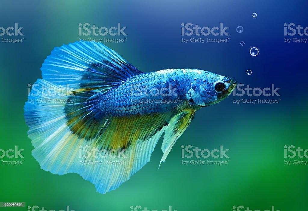 Thai Fish stock photo