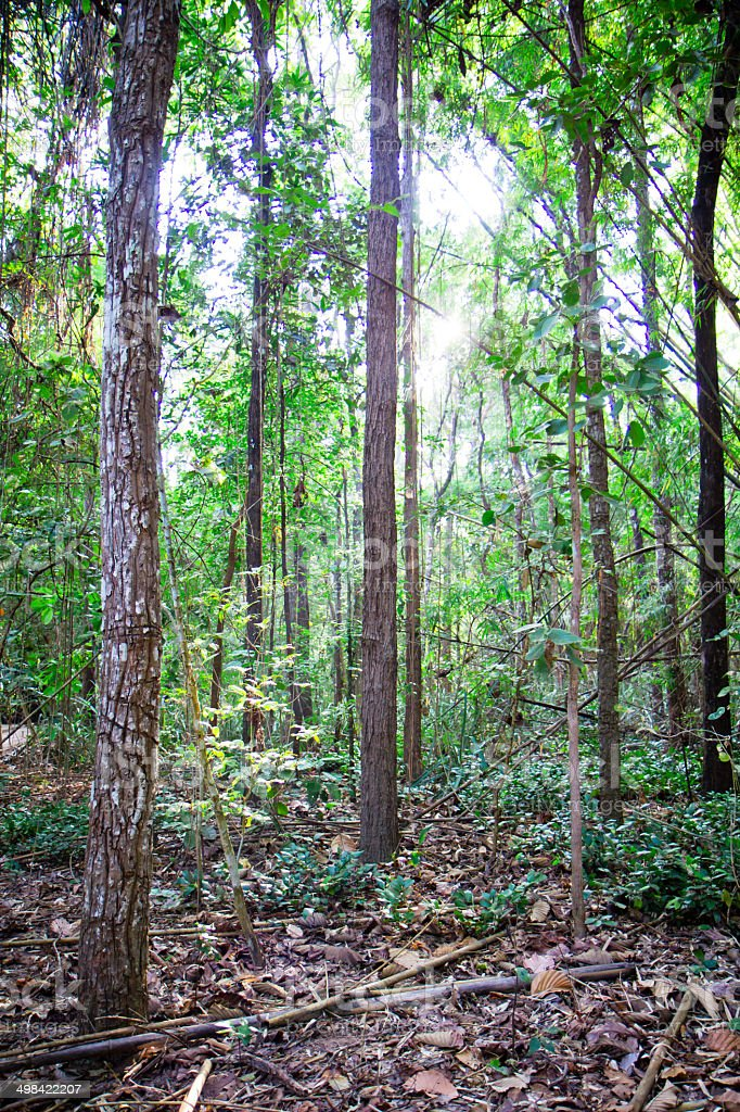 thai forest royalty-free stock photo