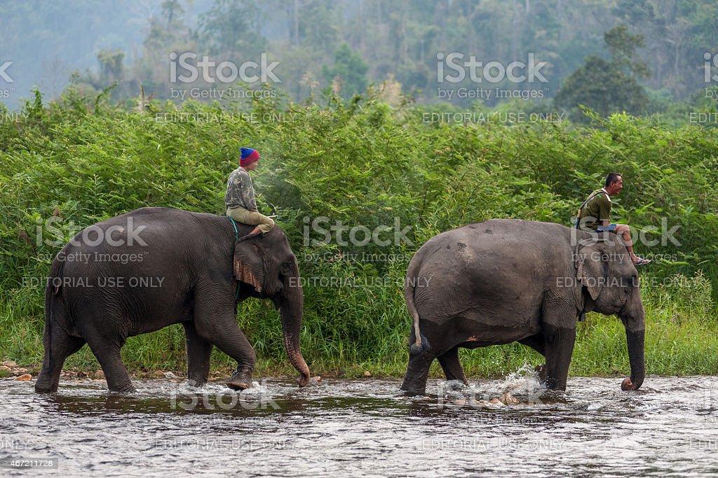 Thai des cornacs équitation éléphants dans la rivière. photo libre de droits