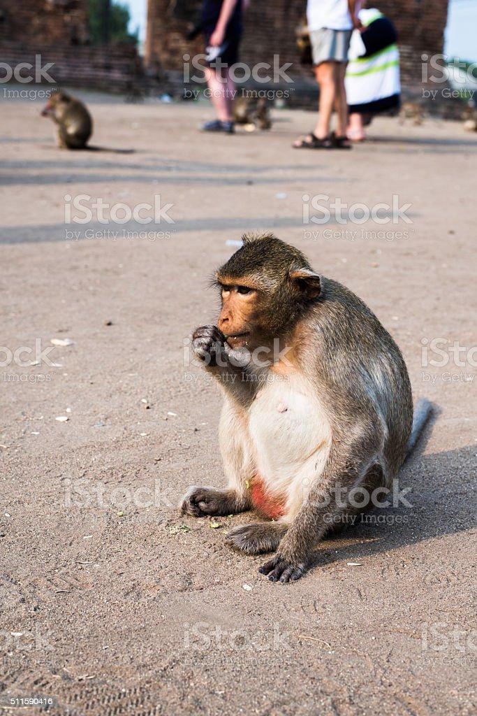 Thai monkey. stock photo