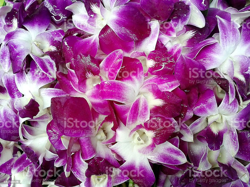 Thai orchid flower stock photo