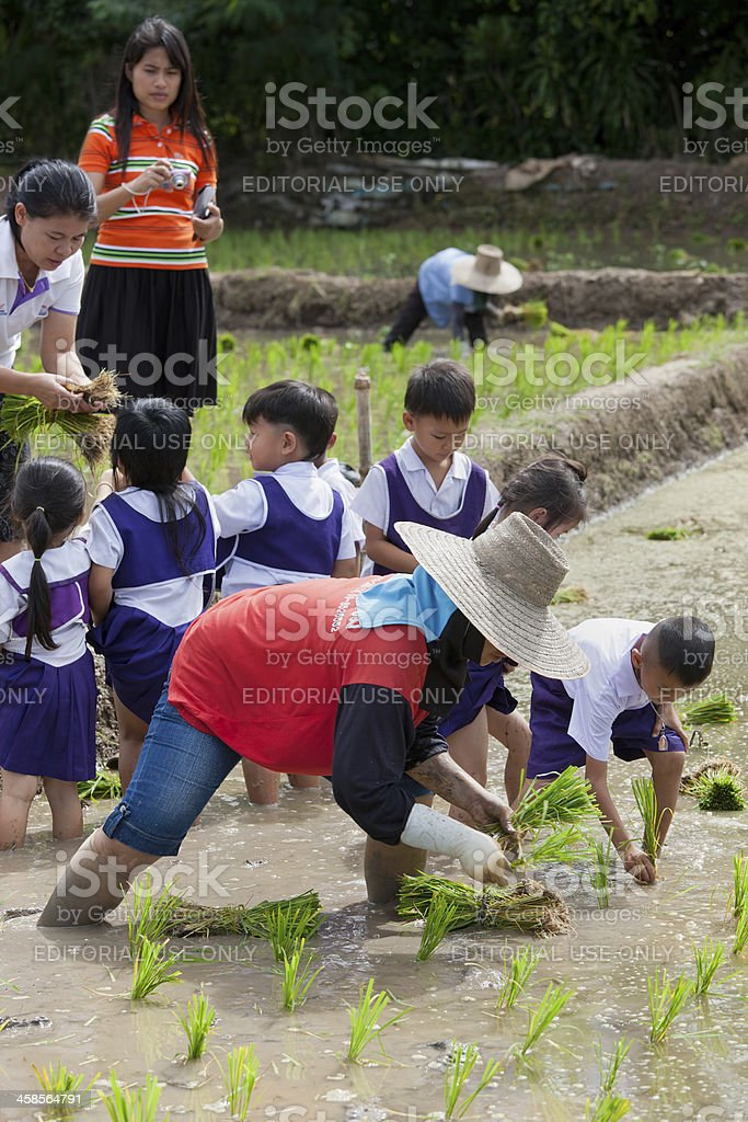 Thai school children learning about growing rice. royalty-free stock photo