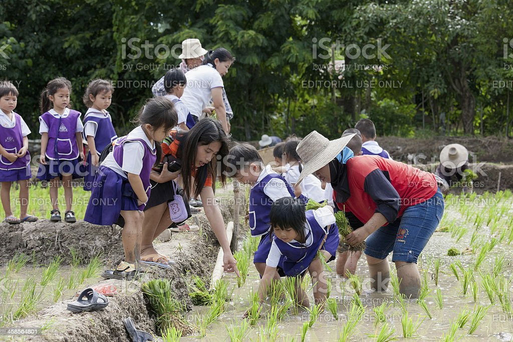 Thai school children learning about growing rice. stock photo