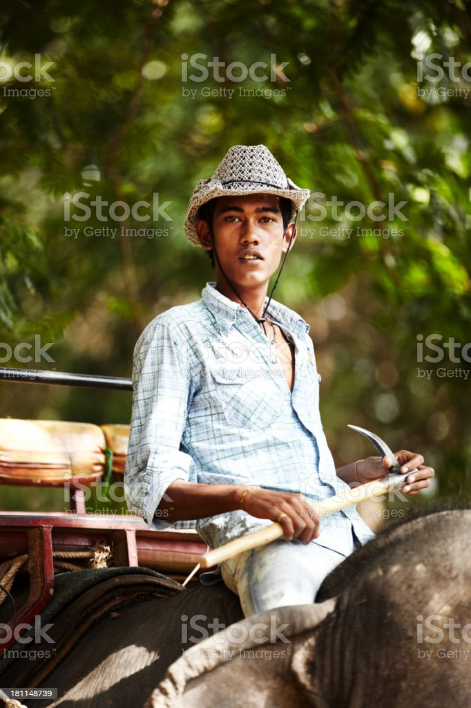 Thai trainer perched precariously on his charge royalty-free stock photo