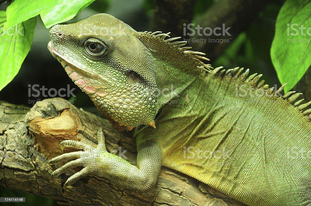 Thai Water Dragon stock photo