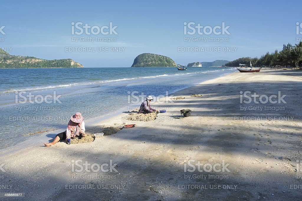 Thai women picking mussels at Dolphin Bay royalty-free stock photo