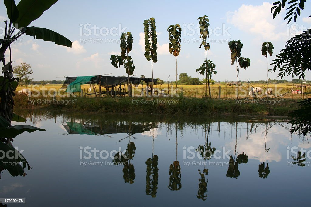 Campagne thailandaise royalty-free stock photo