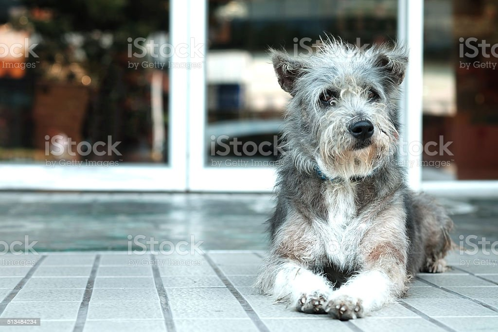 Thailand Dog Looking a Hope stock photo