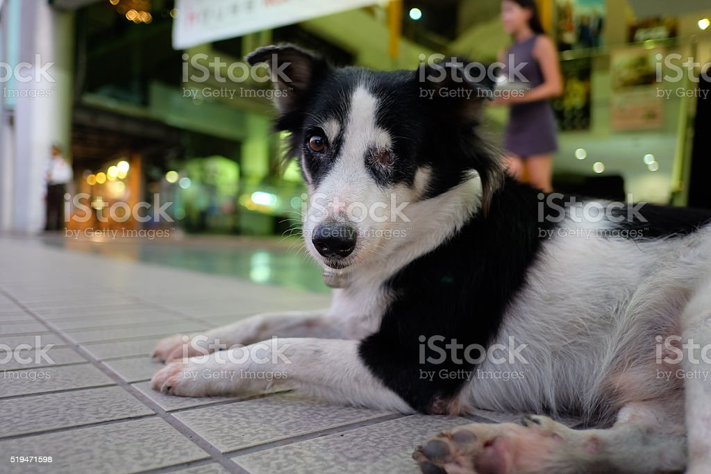 Thailand Dog (one eye)  Looking a Hope - (Selective focus) stock photo