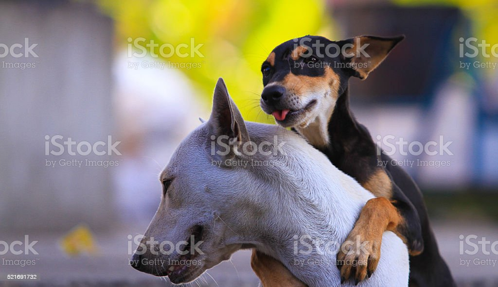 Thailand Dog Looking and playing - (Selective focus) stock photo